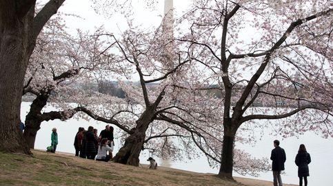Lula no pierde el cariño de Brasil y la belleza de los cerezos en Washington: el día en fotos