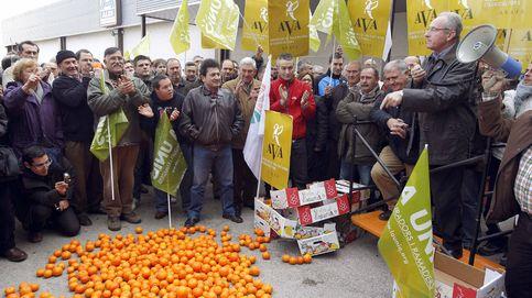 Vender naranjas es más rentable que nunca por el desplome de precios en origen
