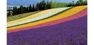 Post de Explorando Hokkaido, la isla de la naturaleza de Japón