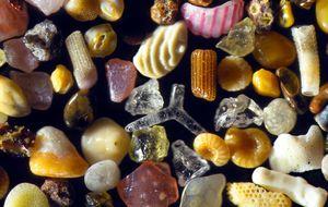 La belleza de lo minúsculo: 24 objetos cotidianos vistos bajo el microscopio