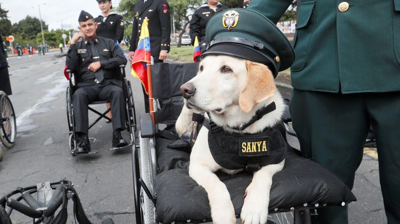 Foto: Perra de la policía, durante un desfile conmemorativo