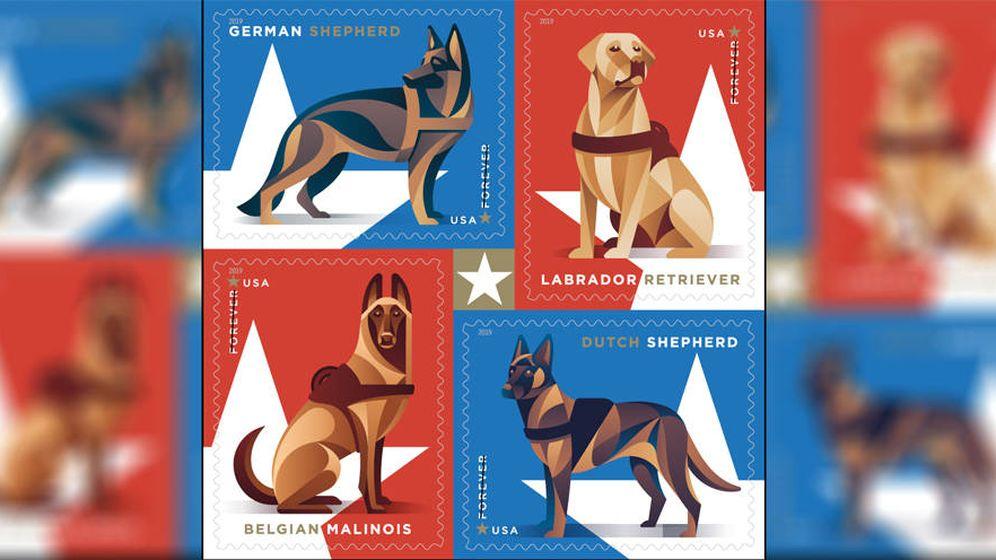 Foto: Los cuatro sellos que formarán la serie de homenaje a los perros militares (Foto: USPS)