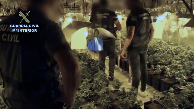 La Guardia Civil localiza 500 plantas de marihuana en una explotación minera