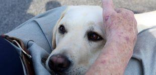 Post de Sully: historia del perro labrador que acompañó a George Bush hasta su muerte