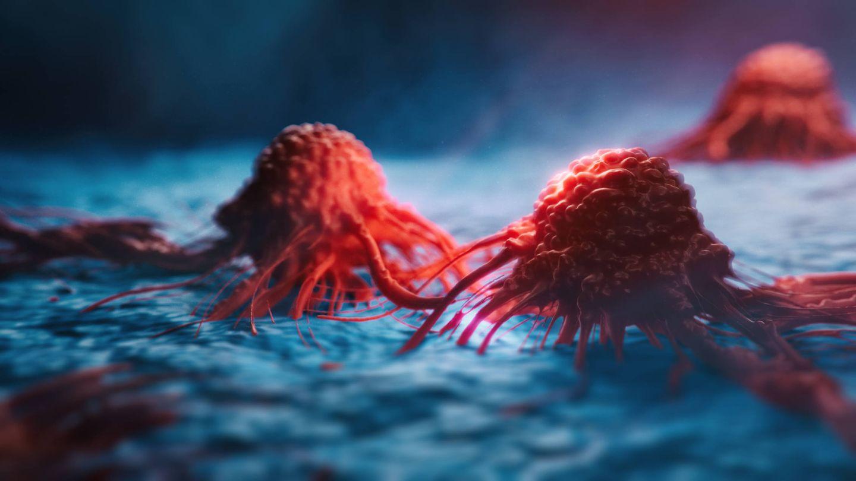 Al inhibir el HTC de las células cancerígenas se impide su crecimiento y reproducción.