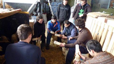 La escuela del País Vasco que tiene las claves para ser un buen pastor