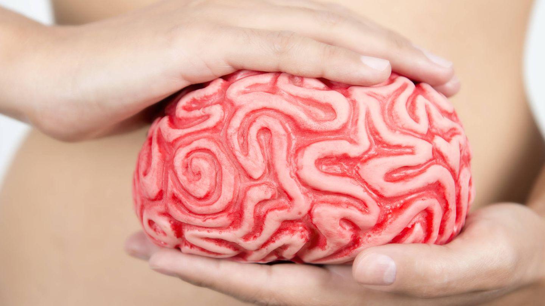 El cerebro es fascinante (Foto: iStock)