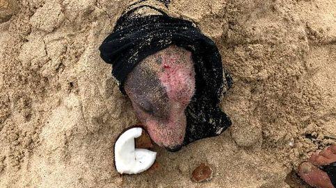 Encuentran a una perra enterrada viva en la playa, quemada y sin restos de piel