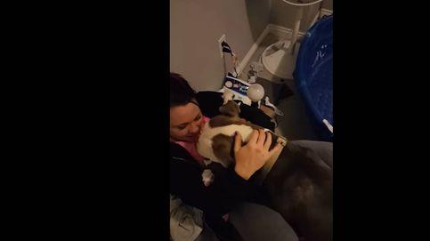 El precioso gesto de confianza de una pit bull abandonada con su nueva dueña