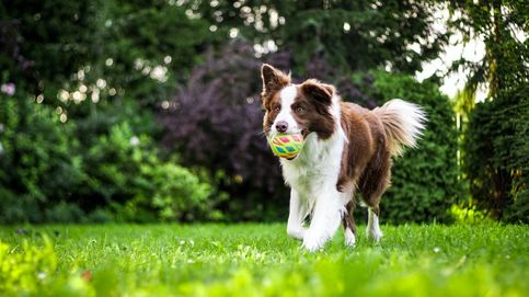 Consejos de un veterinario para alejar a tu perro de las cigarras este verano