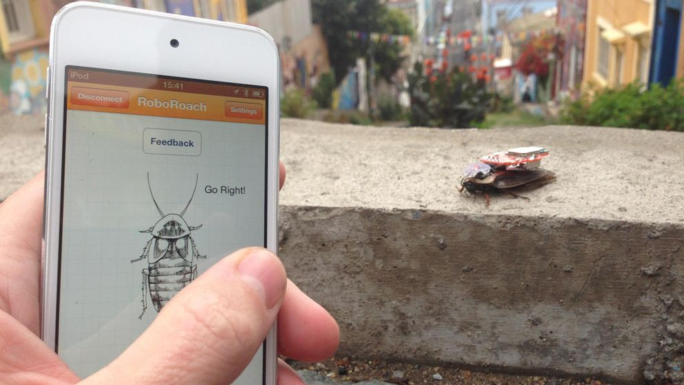El surrealista negocio de convertir cucarachas en cíborgs