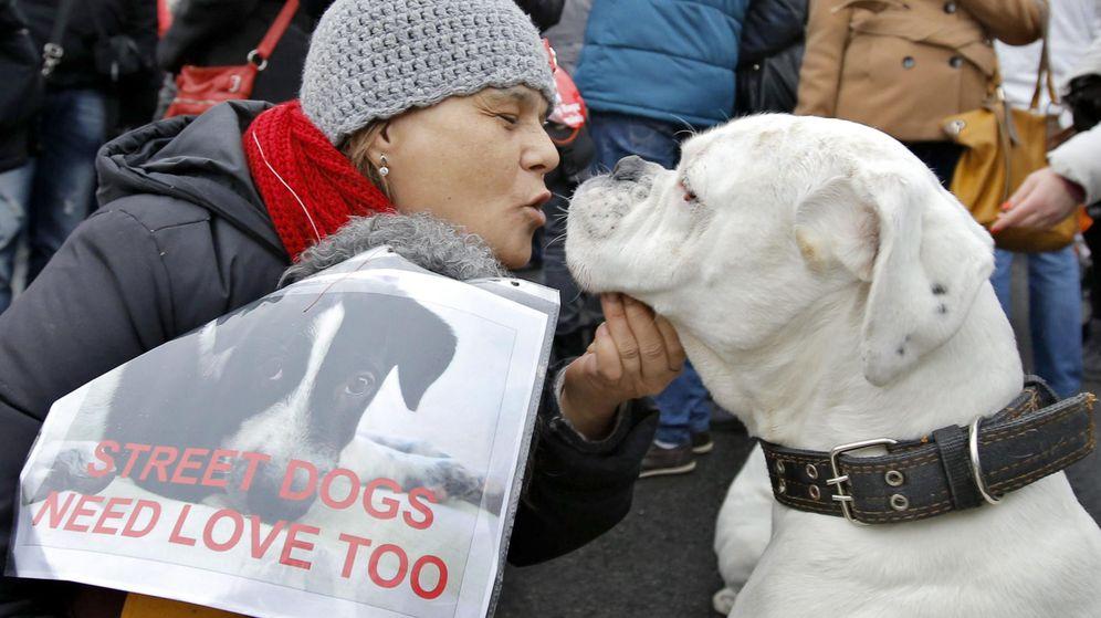 Foto: Los perros tienen sentimientos y, por fin, se los van a reconocer en Australia (EFE/EPA/Robert Ghement)