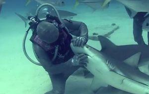 Cristina Zenato, la encantadora de tiburones
