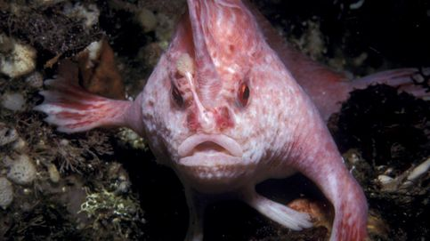 Caprichos de la evolución: los quince animales más extraños del planeta