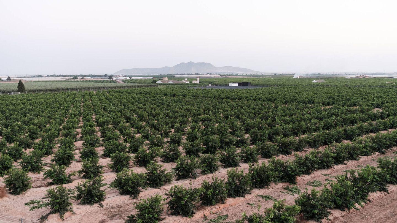 Vista de unos cultivos de regadío en el Campo de Cartagena. (S.B.)