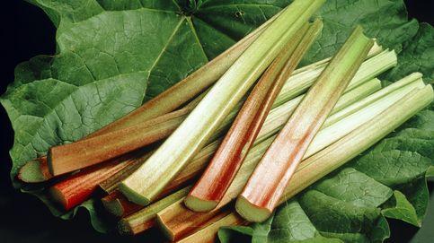 Ruibarbo, un vegetal sorprendentemente rico en vitamina K y calcio