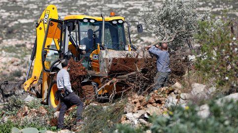 Excavadoras destrozan cultivos palestinos