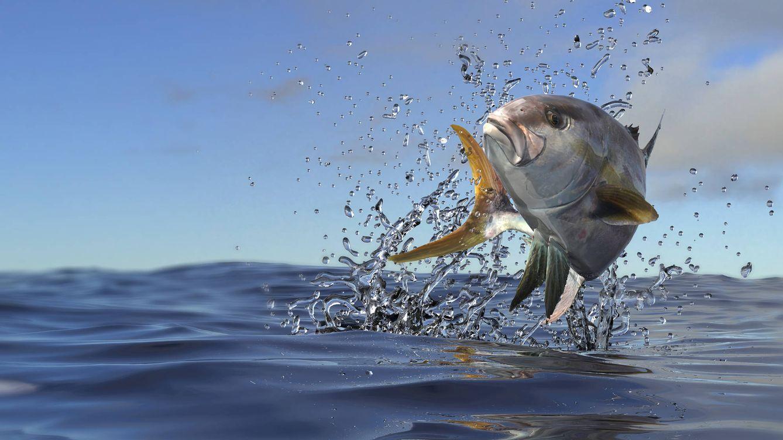 El pez limón, propiedades del pariente humilde del atún de almadraba