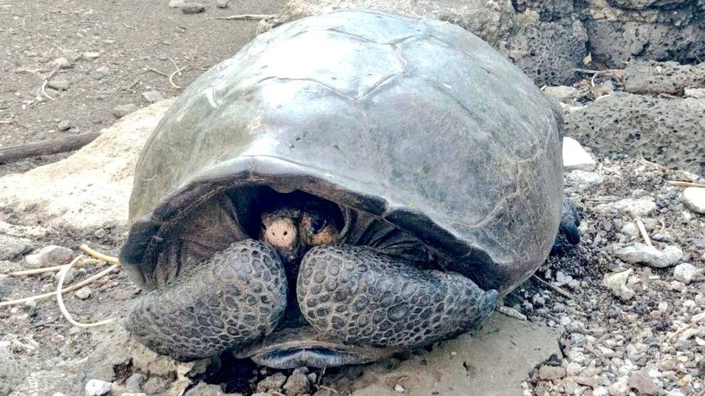 Encuentran una tortuga gigante que creían extinguida desde hace 100 años