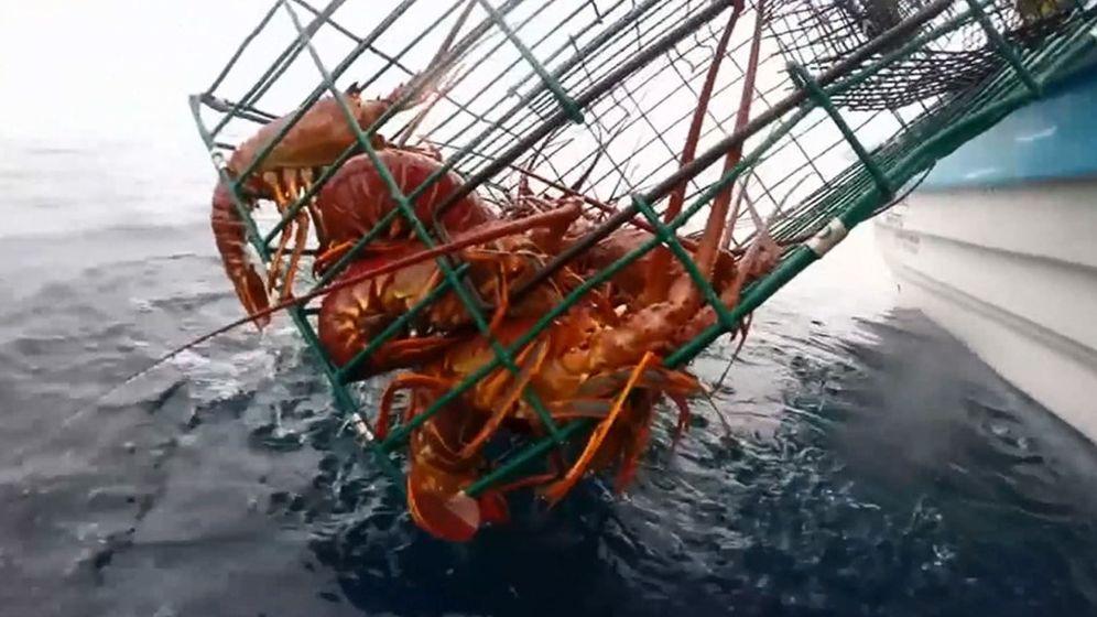 Foto: Una embarcación de captura de la langosta en aguas de Baja California (México). (EFE)