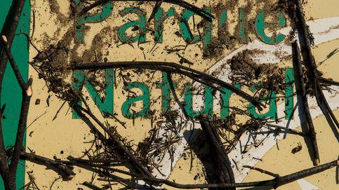 Doñana olvidada: regreso al parque tras la tragedia del incendio