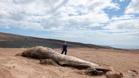 Un grupo de pescadores se convierte en millonario tras encontrar ámbar gris en un cachalote