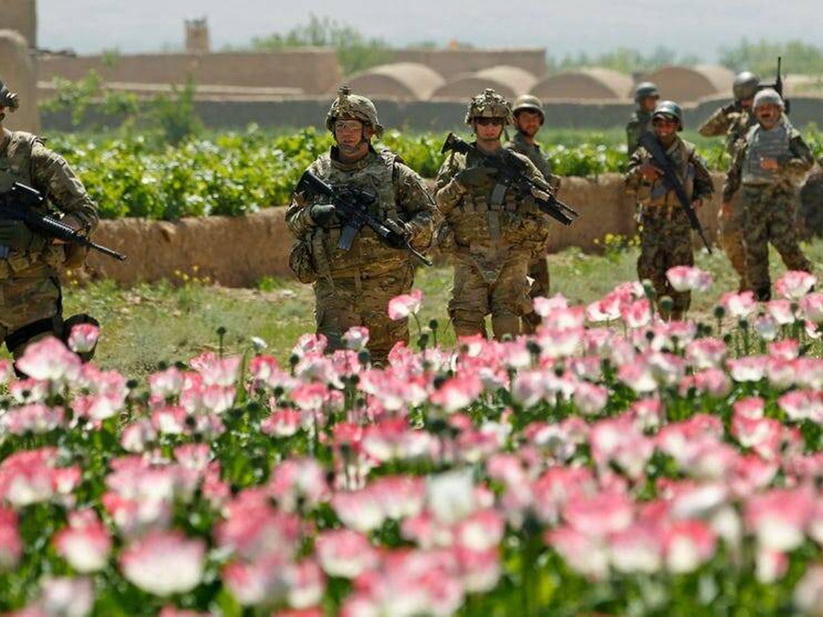 Foto: Soldados estadounidenses ante un cultivo de amapolas. (Reuters)