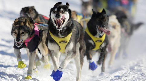 Perros y más de mil kilómetros por la nieve: así es la carrera Iditarod en Alaska