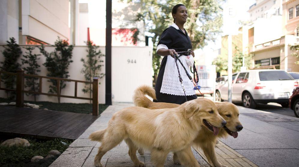 Foto: Los Golden Retriever son una de las mejores razas de perros que existen (Reuters/Bruno Miranda)