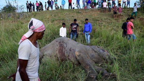 Dos elefantes mueren arrollados por un tren