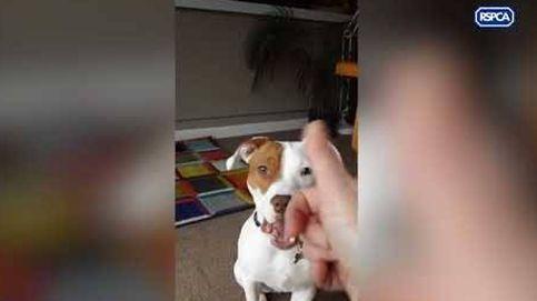 Ivor, el perro sordo que ha aprendido el lenguaje de signos