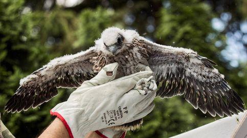 Salvando la vida de los halcones y reclamaciones contra la banca: el día en fotos