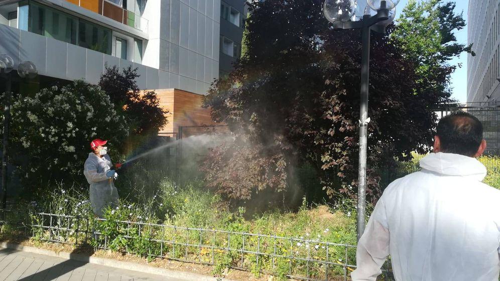 Foto: Los trabajos de fumigación en el exterior de los juzgados.
