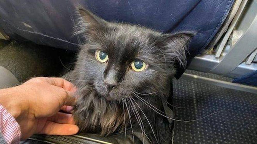 Foto: Sasha, la gata aventurera. Foto: Santa Fe Animal Shelter