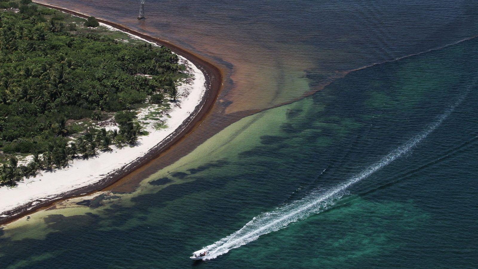 Foto: Las aguas del Caribe mexicano han cambiado su precioso color turquesa por el pardo del sargazo