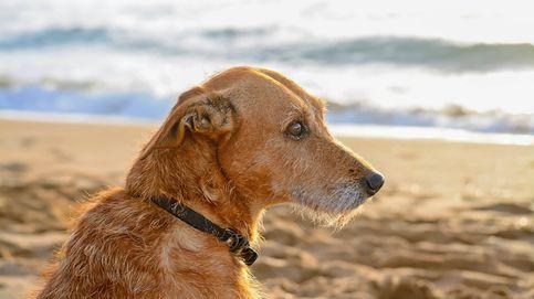 Playas para perros en España: dónde refrescarte con tu mascota estas vacaciones