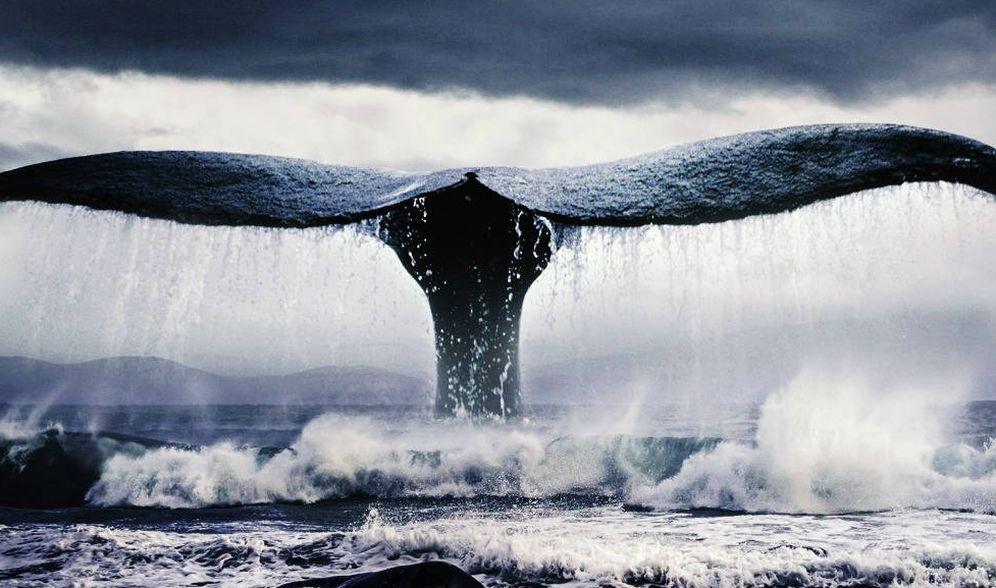 Foto: Detalle de la portada de 'Moby Dick' de Alianza Editorial