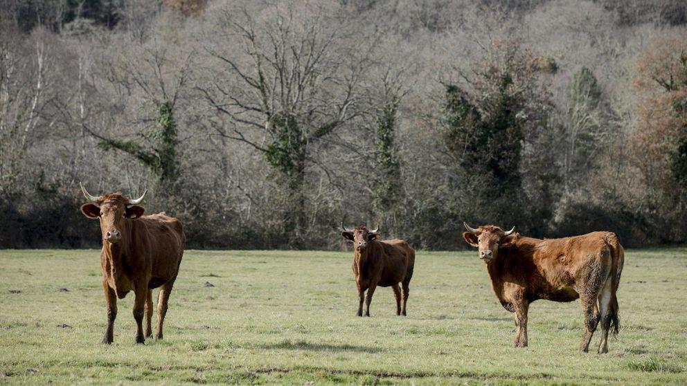 La UE pone fin a las polémicas 'cuotas lácteas' después de 30 años