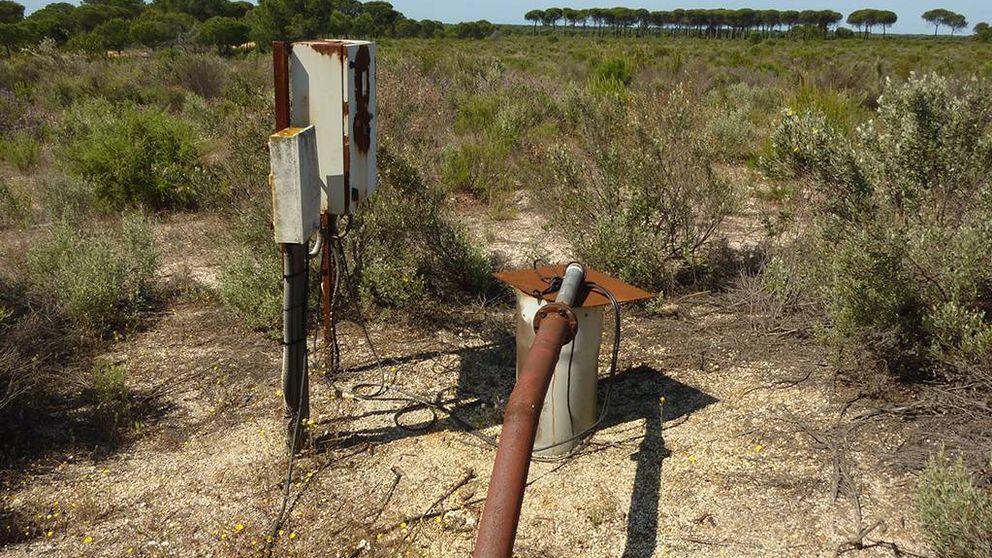 Marismas, pozos ilegales y fresas de Huelva: se recrudece la tensión en torno a Doñana