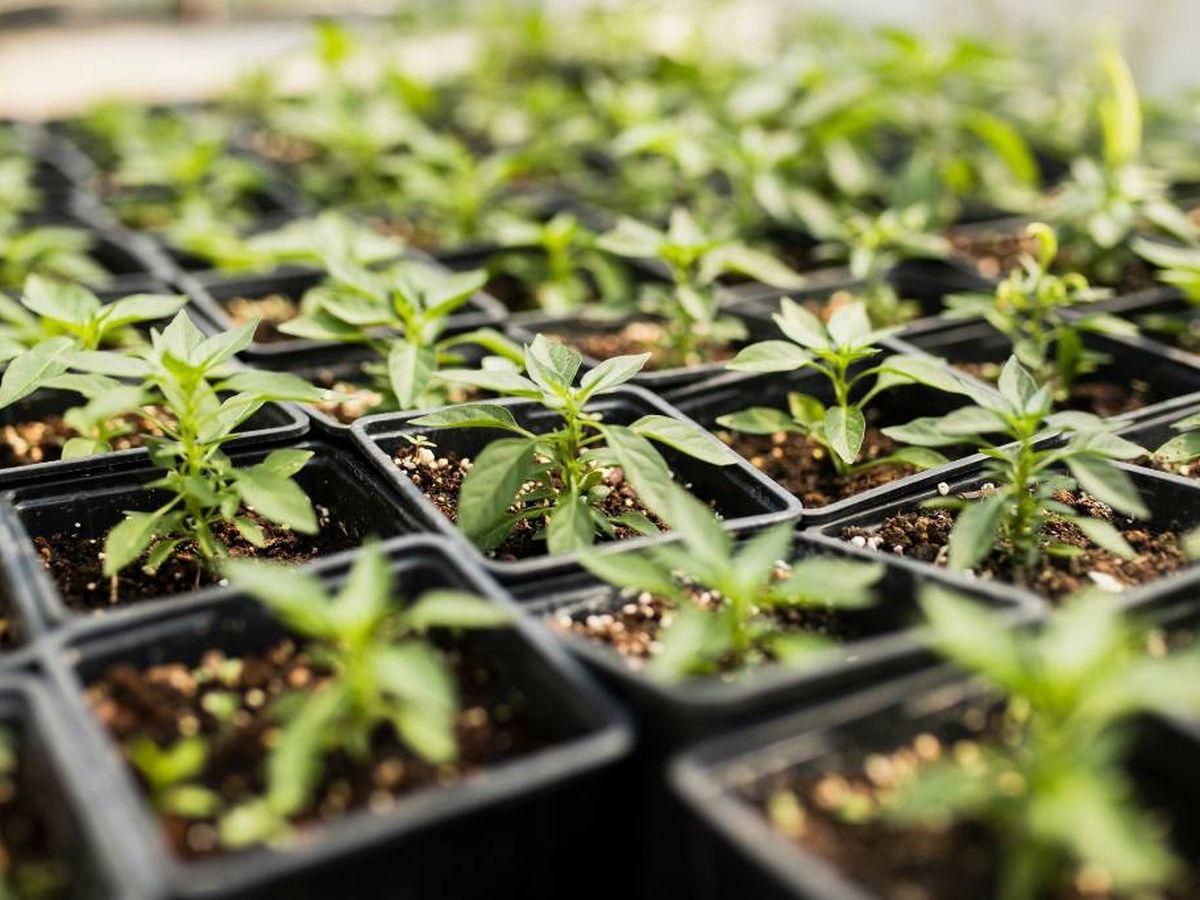Foto: Cuida tu huerta durante el invierno en un invernadero (Foto: Freepik)
