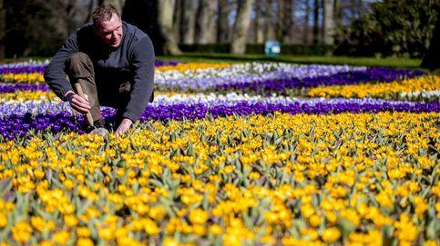 Temporada de tulipanes en Holanda
