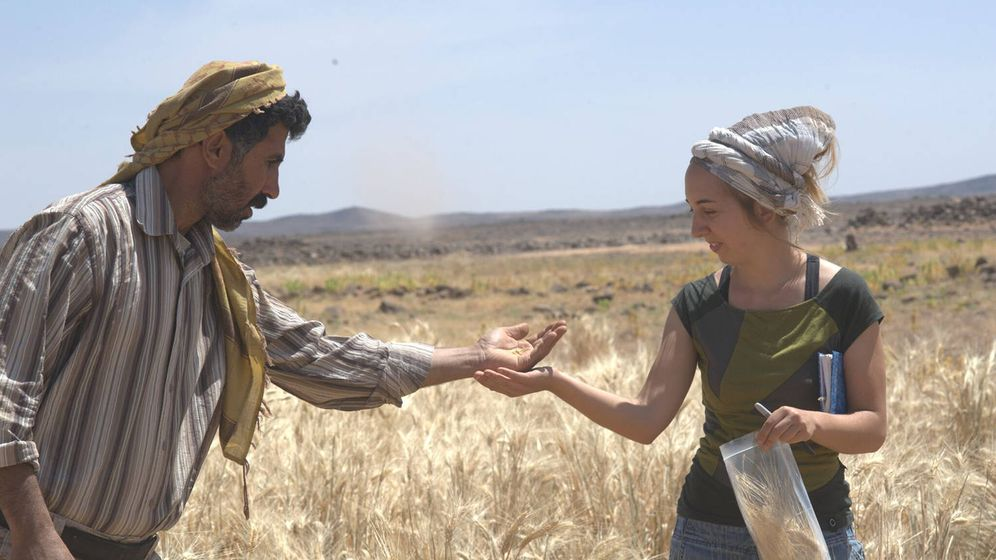 Foto: Amaia Arranz Otaegui y Ali Shakaiteer toman muestras de cereales en el área de Shubayqa. (Joe Roe)