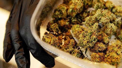 Detenidos dos candidatos de Podemos Laredo por 500 plantas de marihuana