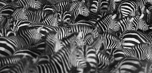 Post de La sorprendente razón por la que las cebras tienen rayas