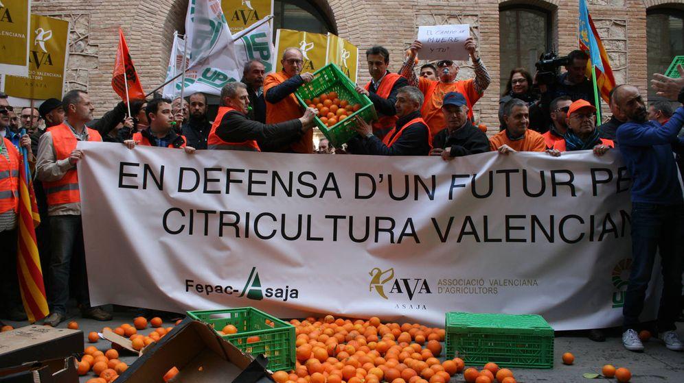 Foto: Protesta de agricultores frente a la Conselleria de Agricultura. (AVA)