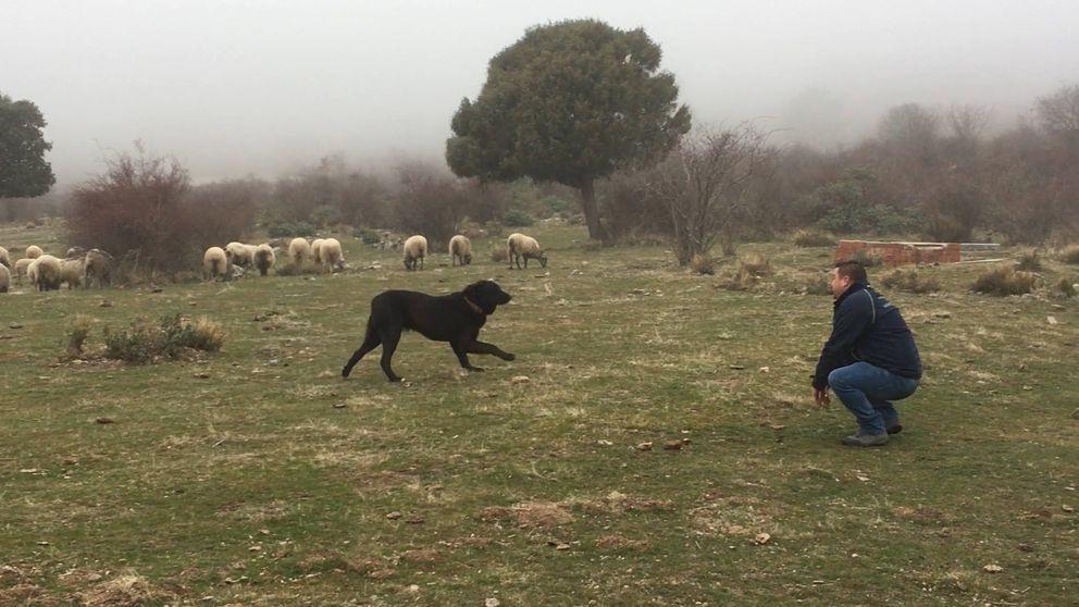 Tizón, el perro actor que enamora a Twitter y trae de cabeza a la Policía