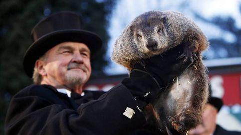 El 'Día de la Marmota' pronostica seis semanas más de invierno
