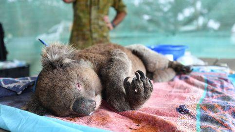 Protestas contra el cambio climático y nuevo hogar de koalas rescatados: el día en fotos