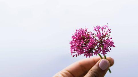 Valeriana: efectos secundarios y beneficios de su consumo