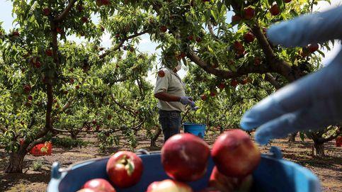 Gobierno flexibiliza requisitos para el cobro de la PAC en el campo y el sector del vino